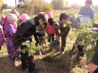 reg-school.ru/tula/arsenievo/pervomaisk/news/trees-20141007-06.jpg