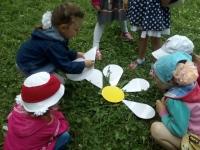 Ромашка - цветок полевой