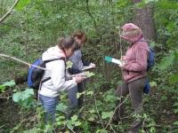 Сбор материала в лесу